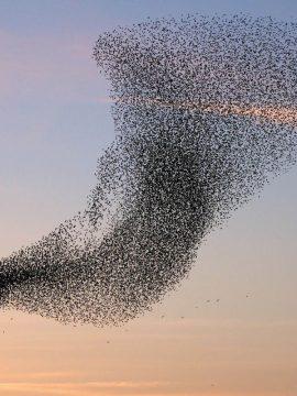 תאוריית עוצמות הגלים והחיבור בין האדם לעולם